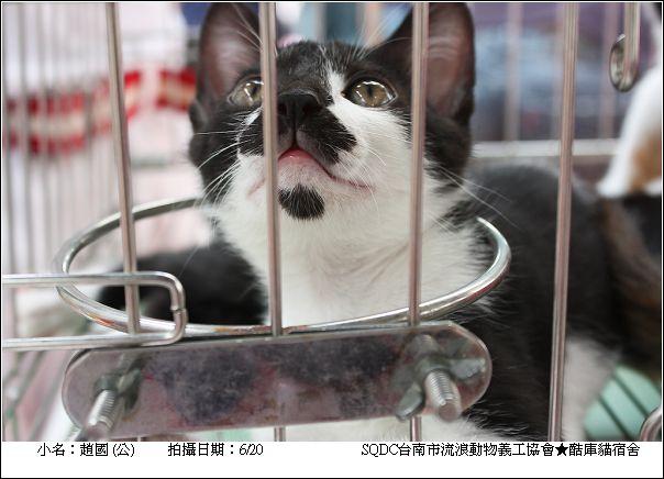 酷庫小貓-趙國