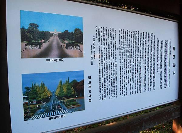 明治神宮外院賞銀杏