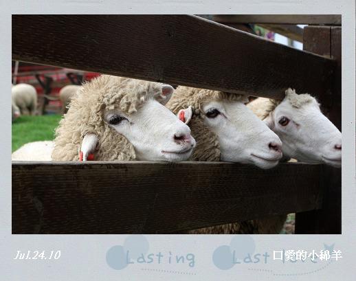 綿羊秀004.jpg