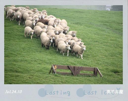 綿羊秀008.jpg