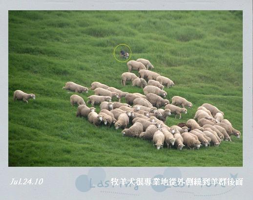 綿羊秀006.jpg