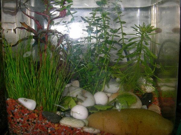 1014魚缸新景