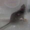 鼠來寶-鼠來寶 (1).jpg