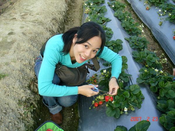 草莓超大的