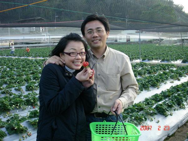 我們也採了好多草莓呢