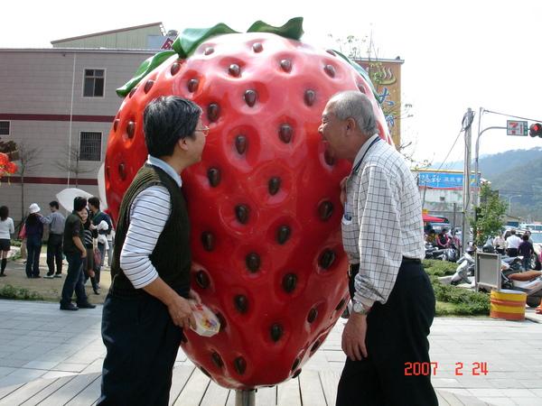 把拔馬麻也想咬一口大草莓