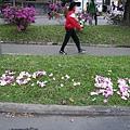 有人用掉落的杜鵑花排字