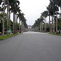 有名的椰林大道