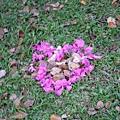 有人把掉落的花瓣排成愛心