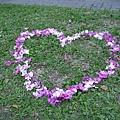 用掉落的花瓣排成一個大愛心
