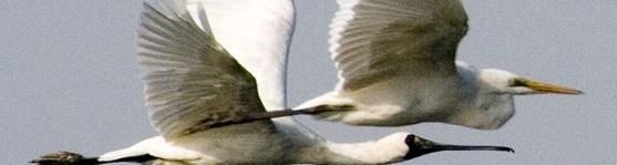 候鳥般的愛情.jpg