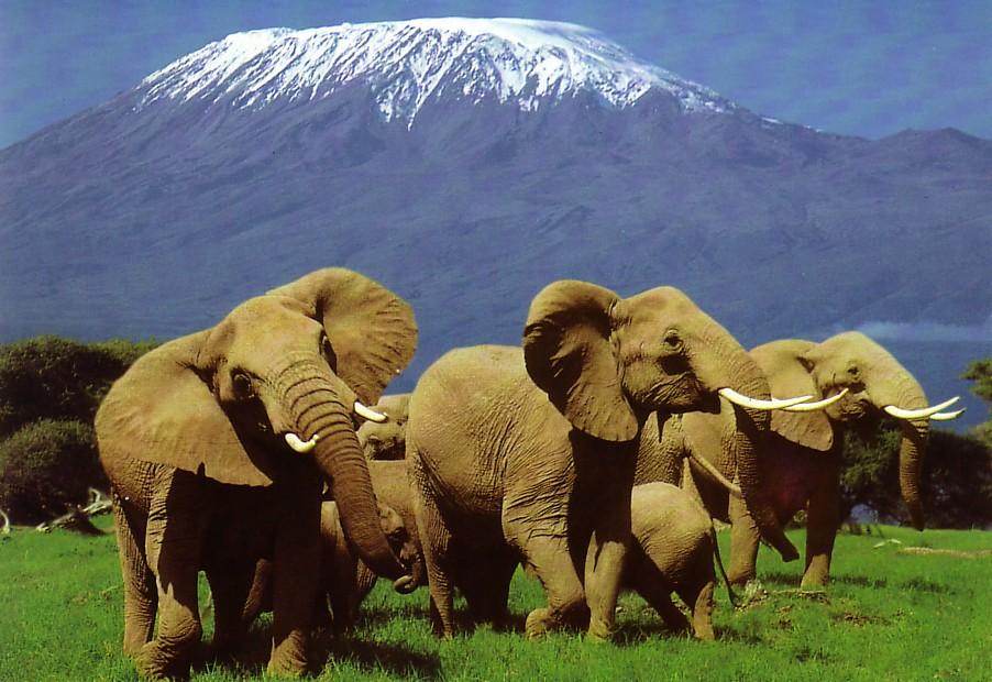 elephan%20herd%20kili.jpg