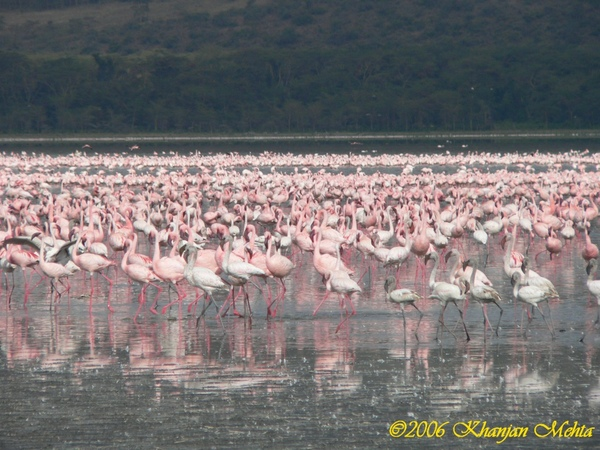 030_Lake Nakuru Flamingoes.JPG