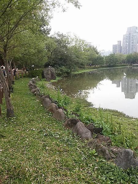 生態池1.jpg