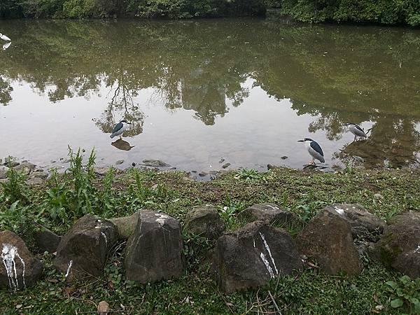 生態池2.jpg