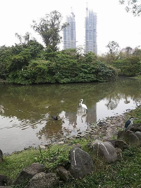 生態池3.jpg