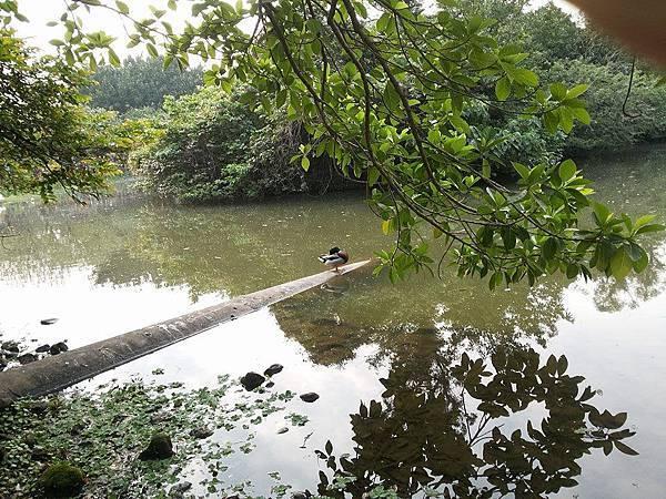 生態池6.jpg