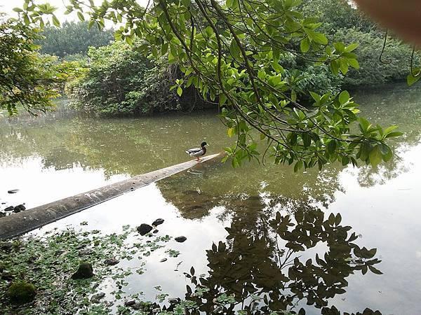 生態池7.jpg