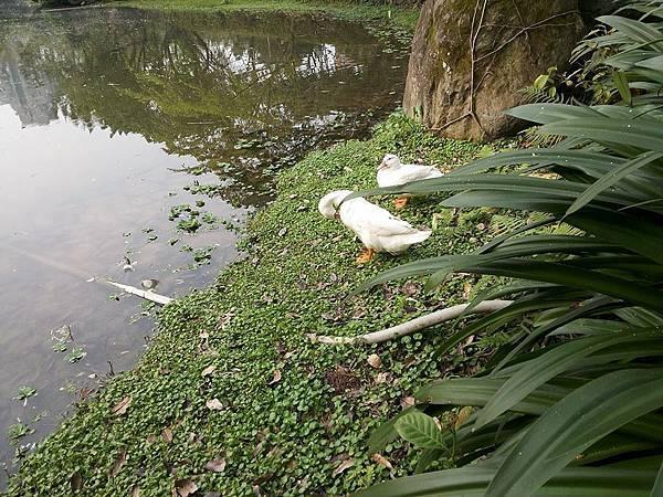 生態池9.jpg
