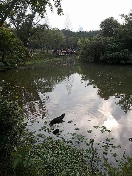 生態池13.jpg
