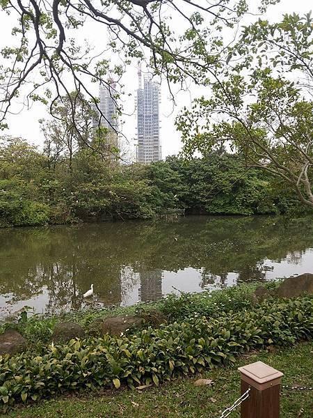 生態池14.jpg