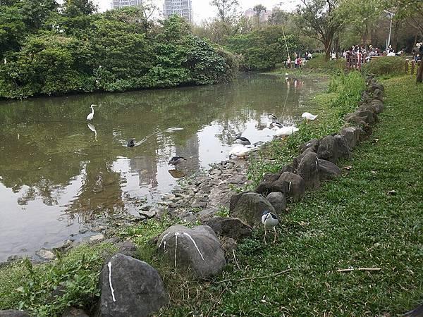生態池18.jpg