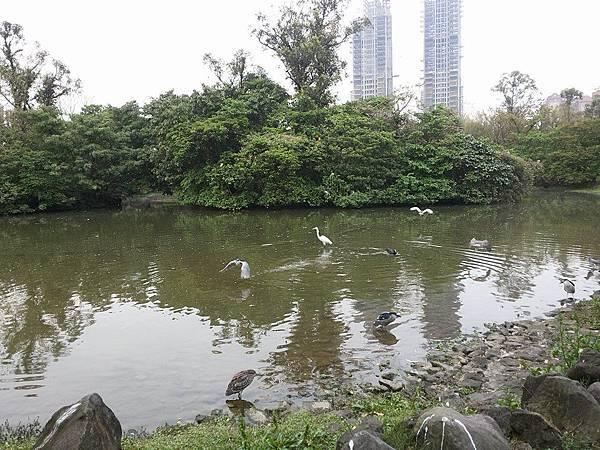 生態池20.jpg