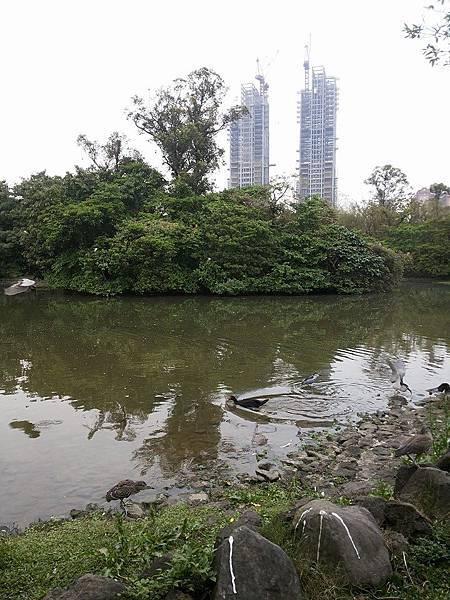 生態池25.jpg