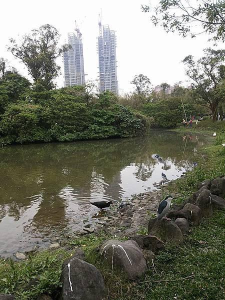 生態池26.jpg