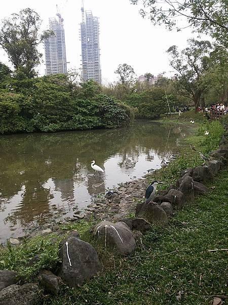 生態池27.jpg