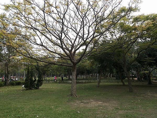 公園一隅1.jpg