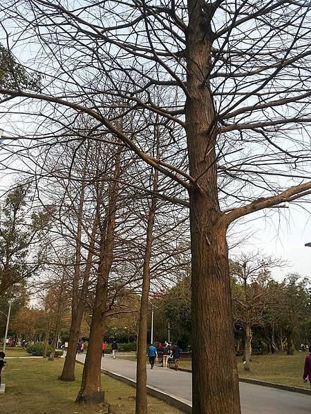 公園一隅2.jpg
