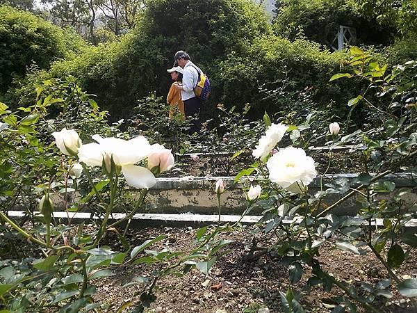 玫瑰25.jpg