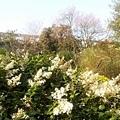 植物園43.jpg