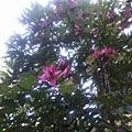 植物園2.jpg