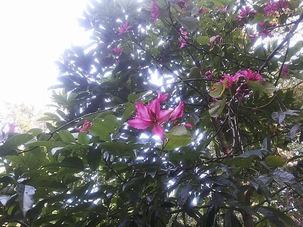 植物園3.jpg