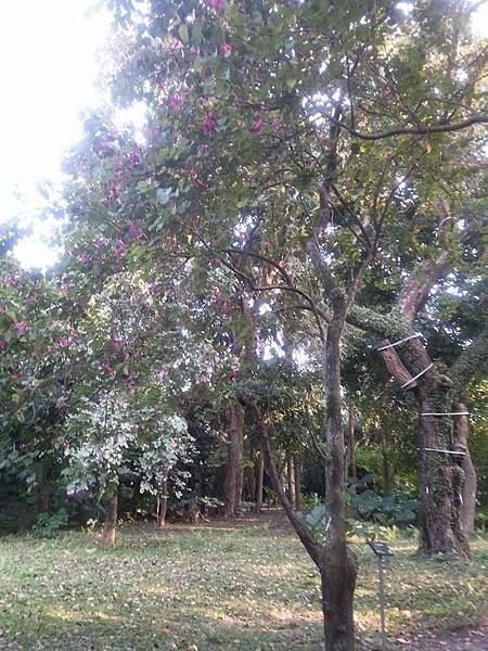 植物園4.jpg