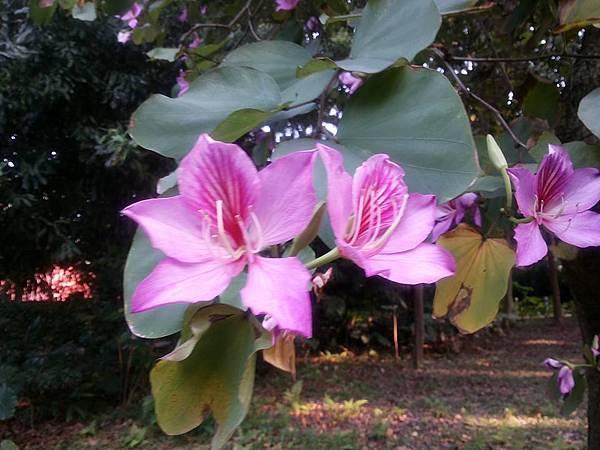 植物園9.jpg