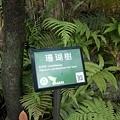 植物園14.jpg