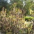 植物園16.jpg