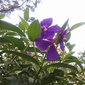 植物園20.jpg