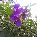 植物園21.jpg