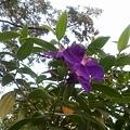 植物園22.jpg