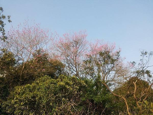 植物園24.jpg
