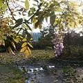 植物園26.jpg