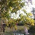 植物園25.jpg