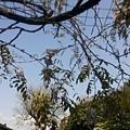 植物園27.jpg