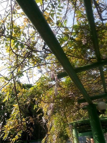 植物園28.jpg
