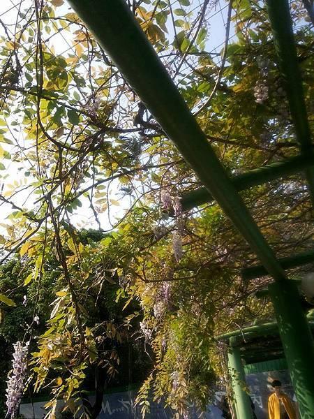 植物園29.jpg