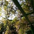 植物園30.jpg